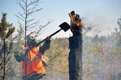 Российский пастух решил поесть и спалил 600 гектаров леса