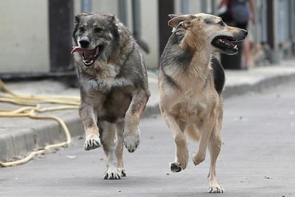 Подмосковные следователи разберутся со стаями бездомных собак