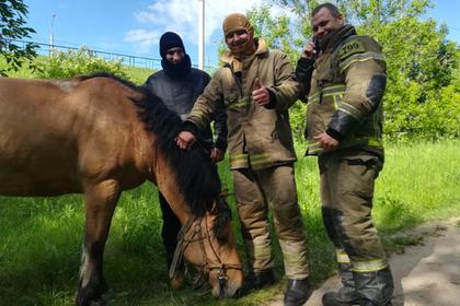 Российские пожарные вернули итальянской туристке коня