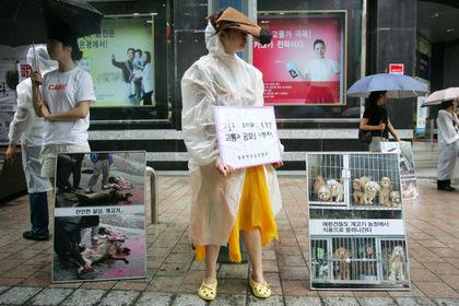 Защитники прав животных выступают против поедания собак