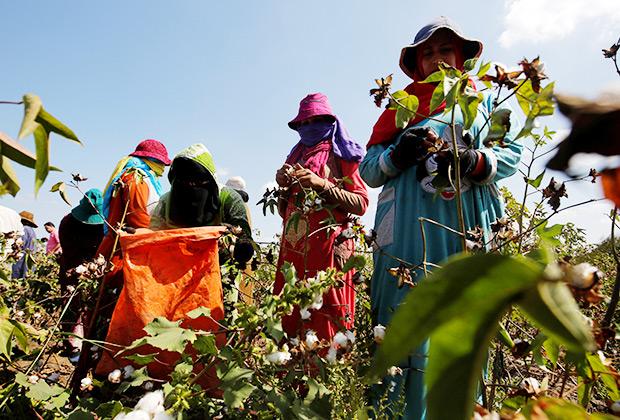 Во многих развивающихся странах при уборке хлопка до сих пор в основном используется ручной труд. Чаще всего женщин и детей.
