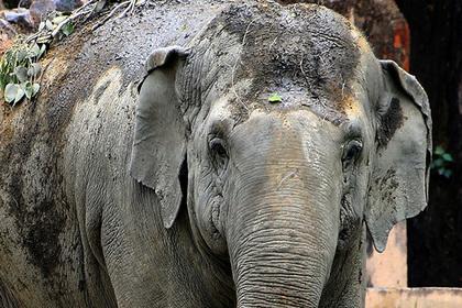 Охранник защищал шахтеров от львов и погиб под ногами слона