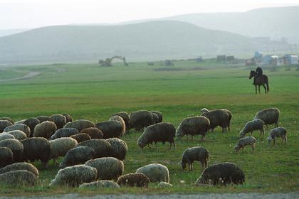 Российский паспорт оказался недоступен для 88-летнего пастуха из Дагестана