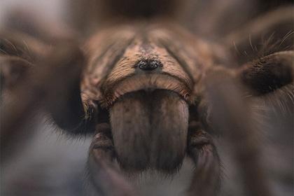 Бабушка случайно подала внукам ягоды с ядовитым пауком