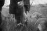 До революции 1905 года псовая охота была развлечением богатых людей. Загнать добычу с помощью стаи собак было страстью русских дворян. Сегодня псовая охота превратилась в экзотический спорт для небольшой группки энтузиастов. Они дрессируют собак, выезжают на природу, соревнуются с другими охотниками.