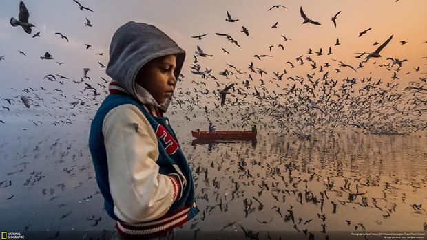 Этот снимок был сделан во время восхода на берегу Джамны — реки, протекающей в столице Индии Дели. «Мальчик стоял в тишине, погруженный в свои мысли, пока тысячи чаек создавали своими криками шумовой фон. Золотой свет восходящего солнца на востоке и синева неба на западе дарили особенную атмосферу. Я приезжаю сюда ради фото уже три года, и только сейчас здесь начинают появляться другие фотографы», — рассказывает автор снимка Нэвин Ватса.