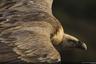 Тамара Бласкес Хайк сфотографировала парящего в небе грифа в Национальном парке Монфрагу в Испании. «Как можно говорить, что стервятники приносят плохие предзнаменования, глядя на такую нежность в глазах этого грифа? — удивляется фотограф. — Стервятники являются важными представителями окружающей среды. Это благородные и величественные животные — короли небес».