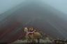 Вместо того чтобы ехать на автобусе на Радужную гору утром, Брайан Ларроса переночевал рядом с ней в палатке, чтобы сделать красивый кадр на рассвете. Увы, утро выдалось туманным. Фотограф прождал полтора часа, но туман не ушел. Брайан уже собрался уходить, как вдруг наткнулся на пару альпак, украшенных традиционным декором племени аймара.