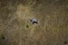 Аэрофотоснимок африканского слона, убитого браконьерами в Северной Ботсване. Цель браконьеров — слоновая кость, ее срезали бензопилой вместе с хоботом животного. Случаи убийства слонов из-за бивней в Ботсване стремительно учащаются и обратной тенденции не намечается из-за попустительства властей. С  2014 по 2018 год число убитых животных в северной части страны выросло почти на 600 процентов.