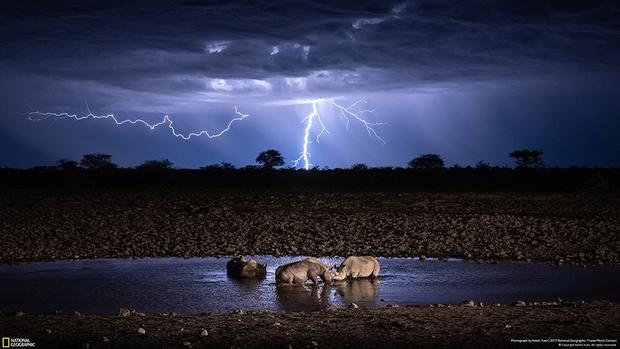 «Это была моя первая поездка в Африку. Группа носорогов пришла на водопой в ночи, а в небе над ними полыхали молнии. В ту ночь я сделал более десяти тысяч кадров, чтобы получить этот снимок», — рассказал историю фотографии ее автор Кельвин Юен.