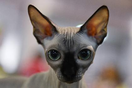 Стала известна судьба переданного семье Бари Алибасова кота-самозванца