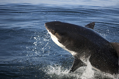 Голодная акула напала на ребенка