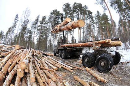 Названы масштабы контрабанды леса из России