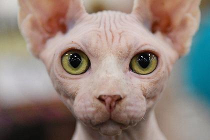 Переданного семье Алибасова кота-самозванца потребовали вернуть