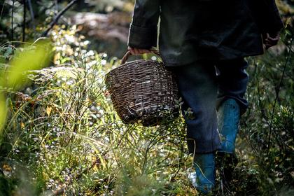 Китайцев и японцев вывезут в тайгу за грибами
