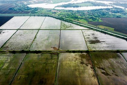 Рисовые поля в Краснодарском крае