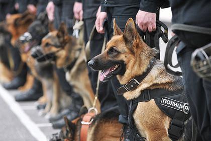 Главный кинолог МВД заступился за опасные породы собак