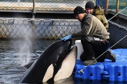 Путин порадовался за косаток из «китовой тюрьмы»