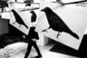 Сеульские вороны. Этот снимок — часть текущего проекта, документирующего как контрасты, так и сходства в повседневной жизни нескольких азиатских городов, таках как Сеул, Токио, Ханой и Янгон, на разных этапах их экономического и социального развития. Этот снимок занял второе место в категории «Одиночная фотография».