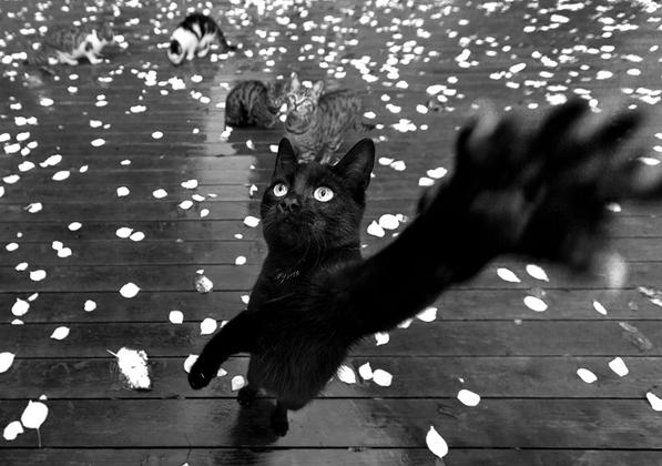 Бездомные кошки буквально оккупировали Стамбул. Фотограф Сами Учан вспоминает, как впервые оказавшись в турецкой столице, принялся изучать культурное наследие города, фотографировать городские стены, мечети и османские надгробия. Но постепенно фотографу наскучил музей под открытым небом.     <br><br> «Когда я посмотрел на свои фотографии этих камней, я увидел милых гостей, которые появились вокруг них. Казалось, что кошки, слоняющиеся по кладбищам, ждут, когда кто-нибудь с ними подружится, — умилился фотограф. — Заметив их, я изменил свой фотографический стиль. Мне удалось создать великолепные композиции с их помощью». <br><br> Кошки в Стамбуле снуют повсюду. Не проходит и пяти минут, как они появляются вокруг вас, где бы вы ни находились. Они храбры и дружелюбны, порой кокетливы, словно показывают, что могут вести себя как люди. Некоторым кажется, что именно кошки — настоящие хозяева Стамбула. По выражению очарованного этими местами Учана, они настоящие короли этого города.