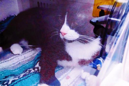 Кот по кличке Феликс