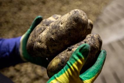 Полярный круг засадили картошкой