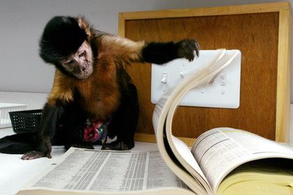 Найдены принадлежащие обезьянам древние технологии