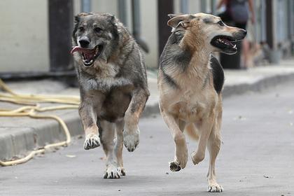 Власти Подмосковья рассказали о борьбе с бешенством животных