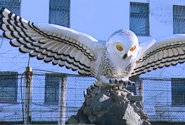 Скульптура полярной совы во дворе ИК-18