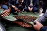 Несмотря на то что чудодейственные свойства кордицепса научно не подтверждены, китайцы считают, что гриб лечит буквально от всего. Постоянный рост спроса на него привел к тому, что многие крестьяне бросили работу в своих деревнях и отправились в горы за быстрым заработком.