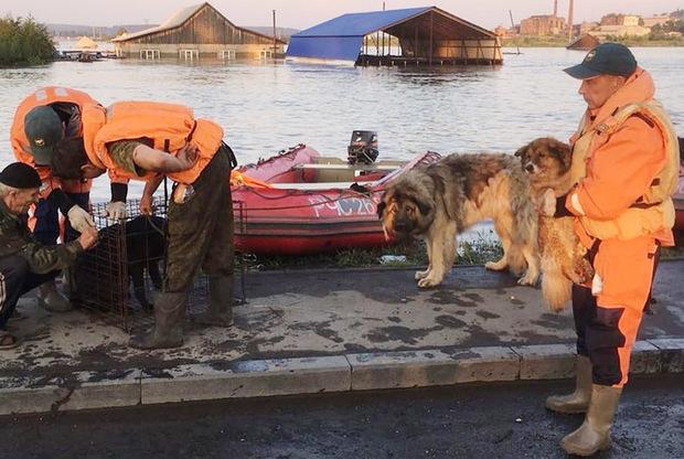 Сотрудники МЧС и кинологи питомника «К-9» провели операцию по спасению домашних животных, брошенных в Тулуне. Им удалось спасти более ста животных. В питомнике для них были построены вольеры.  <br></br> «Забрали всех, кто тонул, кто был в опасности. Очень много животных на месте забрали найденные хозяева», — рассказала ТАСС волонтер-кинолог Анна Файвкина.