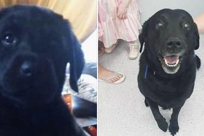 Собака вернулась к владельцу спустя девять лет