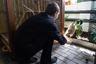 В конце 2015 года мини-зоопарк колонии пополнился новым обитателем — годовалым енотом-полоскуном по кличке Сема, которого ИК-2 подарила прежняя хозяйка, сотрудница управления ФСИН по Свердловской области. Первое время Семе разрешалось купаться в бассейне Лакостика под присмотром персонала, но затем енот из-за наступления половой зрелости стал агрессивен к крокодилу. Их совместные купания прекратились, а администрация колонии начала искать для Семы самку.