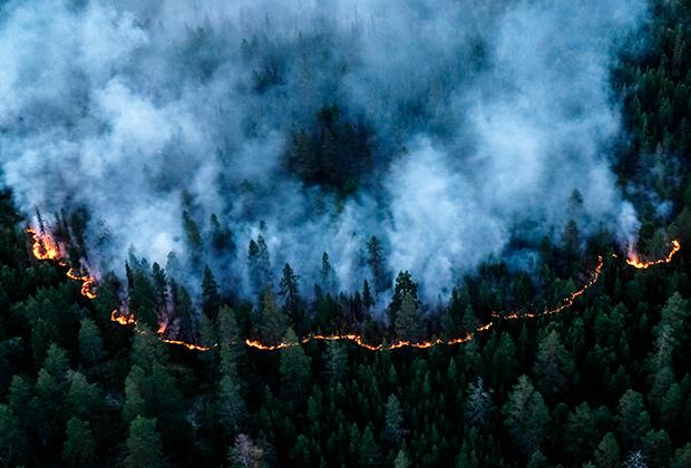 Лесной пожар в тундре в районе реки Лосинга в Мурманской области. 2018 год
