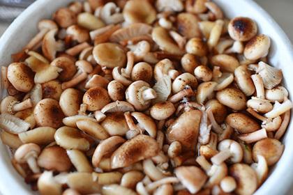 В России захотели контролировать сбор грибов