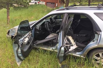 Медведь сел в машину и разбился: Звери: Из жизни: Lenta.ru