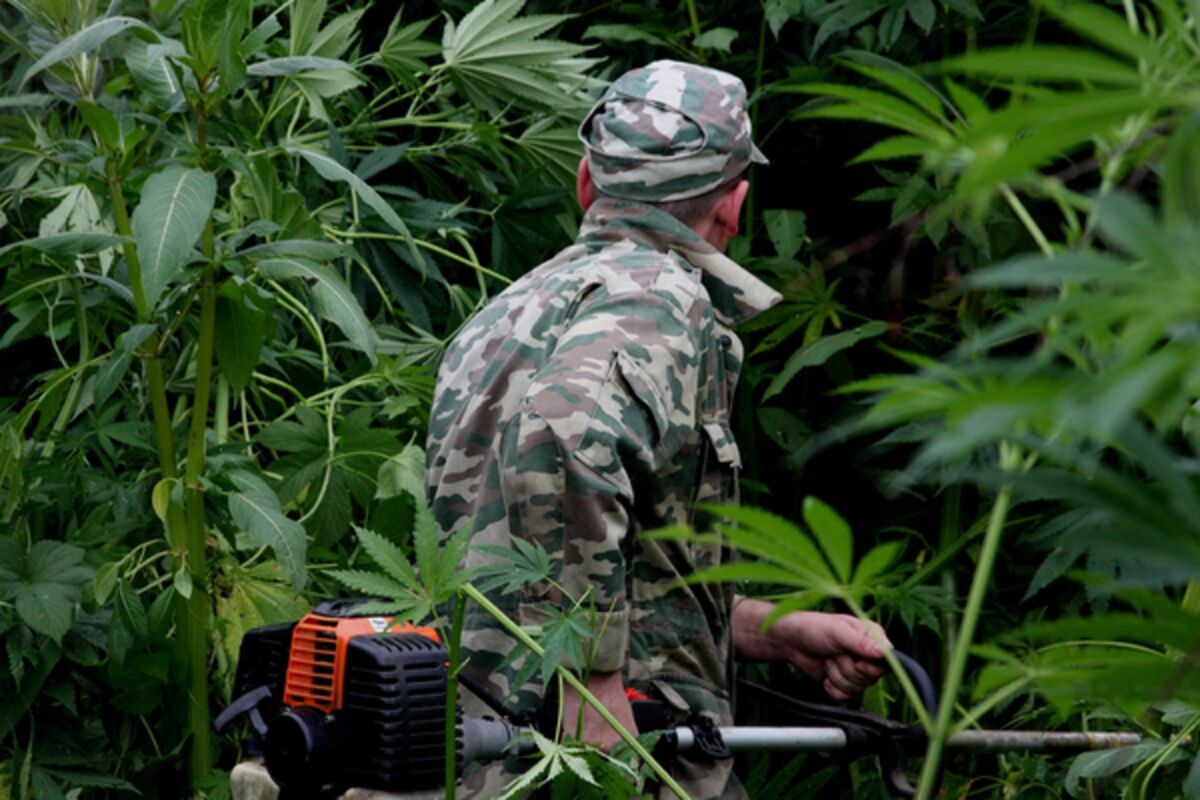 Солдат конопля все форумы выращивания конопли