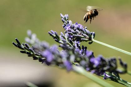 Объяснена массовая гибель пчел в России