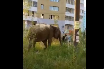 https://icdn.lenta.ru/images/2019/07/14/12/20190714123047278/pic_bd2041f521a91458b3385b228ee8146f.png