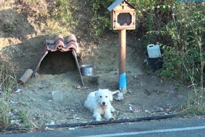 Преданный пес полтора года сидел на месте гибели хозяина и растрогал людей
