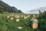 Алтай славится своим медом, коего здесь куча и всяких видов: высокогорный, с прополисом, с цветочной пыльцой и другие. Поскольку промышленности на Алтае почти нет, то многие занимаются сельским хозяйством и в том числе пасеками, где можно посмотреть соты с пчелами а потом купить в маленьком магазинчике мед.