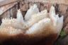 На Алтае есть куча туров и экскурсий на пасеки, где могут рассказать про процесс приготовления меда, про пчел, соты и многое другое.