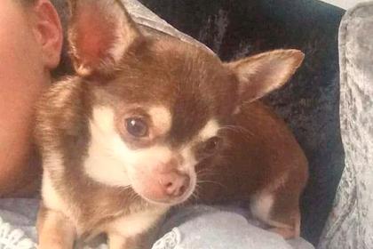 Чайка украла собаку на глазах у мужчины