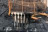 """Хабаровский край. На месте пожара в палаточном лагере """"Холдоми"""", где сгорело 20 палаток. В результате происшествия погиб ребенок. Пресс-служба ГУ МЧС РФ по Хабаровскому краю"""
