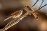 «В марте я провела пять вечеров с двумя американскими пустельгами, — вспоминает фотограф Синди Геддель. — Мне пришлось пешком углубиться в заповедник вдоль реки Санта-Клара и вскарабкаться на крутой склон, чтобы подобраться поближе к их уровню. Каждый вечер самец улетал на охоту, а самка оставалась на верхушке их любимого дерева и ждала его возвращения. В течение следующих двух часов он приносил ей до пяти ящериц, которых она охотно съедала. За едой часто следовал недолгий сеанс спаривания».