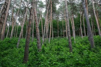 Раскрыты правила выживания в лесу
