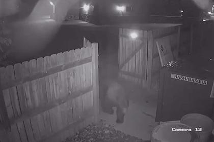 Медведь позарился на мусорный бак магазина марихуаны и остался ни с чем
