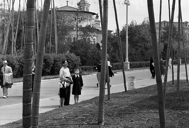 Бамбук у павильона «Грузия»