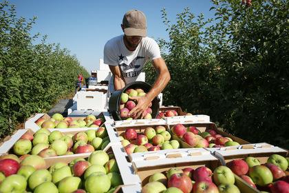 Ученые нашли способ правильно грызть яблоки