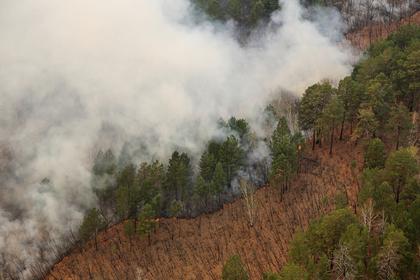 Дым от горящих российских лесов дошел до Казахстана